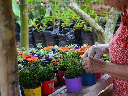 Las mujeres de La Comunera trabajan en la siembra de semillas, especialmente plantas aromáticas.