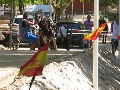 La violencia contra los caballos en un deporte valenciano indigna a los animalistas