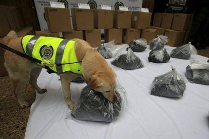 La perra policía 'Mona' con el cargamento de cocaína negra.