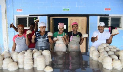 Un grupo de mujeres indígenas de La Muskitia muestra las medusas que procesa para luego ser vendidas.