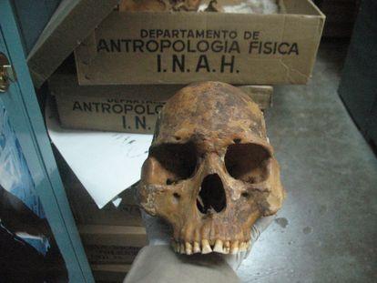 Cráneo de un pericú analizado en el estudio de la revista 'Science'.