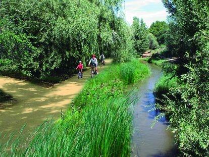Lote 1 Corredor Manzanares norte: El plan incorpora la renaturalización de la senda paralela al curso norte del río Manzanares, creando un camino peatonal y para bicicletas e intensificando la plantación de especies de ribera. PINO FORESTAL INGENIERÍA