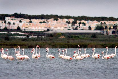 Lagunas de las Salinas de Torrevieja.