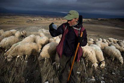 El pastor Aitor Antón, con su rebaño en la comarca de La Bureba, Burgos.