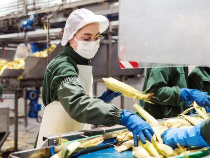 Huercasa es una de las empresas promotoras de Ebro Food Valley