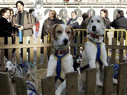Los perros de Pirena