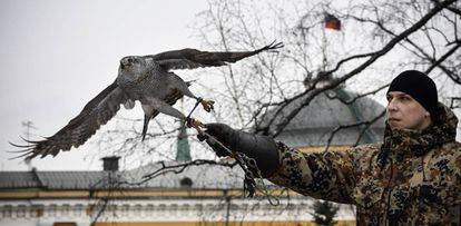 La azor Alpha y el cetrero Alexei Vlásov en los jardines del Kremlin.