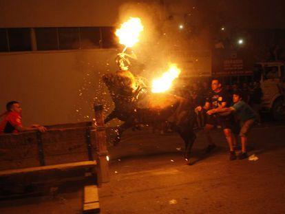 Foto de archivo de un toro embolado en Amposta (Tarragona)