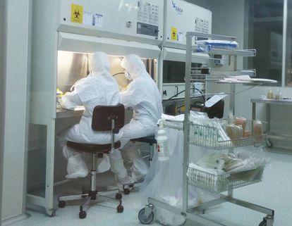 Paula Río y Susana Navarro manipulan células madre de un paciente en la sala estéril del Ciemat.