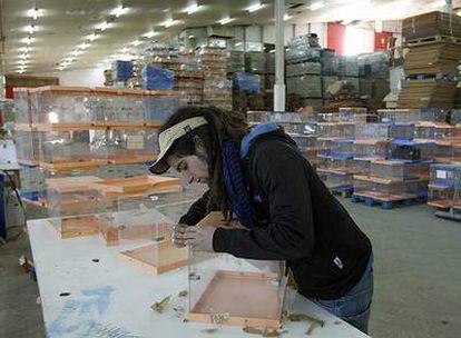 Un operario repara urnas en el pabellón 9 de la Casa de Campo de Madrid, donde se ultiman los preparativos para el 9-M.