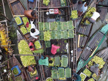 Vista general del mercado flotante de guayaba de Barishal, en un canal del río Katcha, en Bangladés.