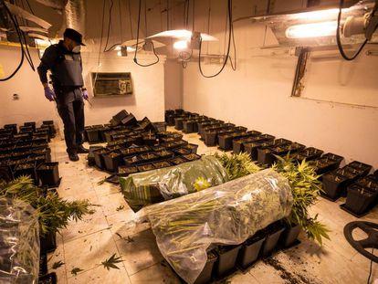 La Guardia Civil interviene una plantación ilegal de cannabis en un pueblo del área metropolitana de Granada.