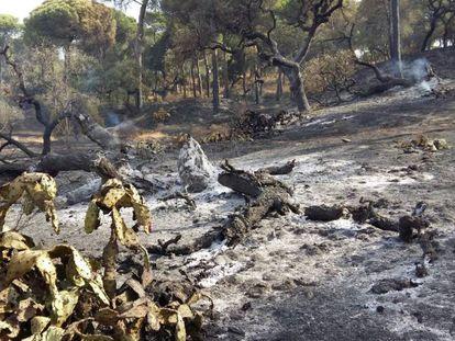 Estado en el que ha quedado Fuentepiña tras el incendio registrado en Moguer.