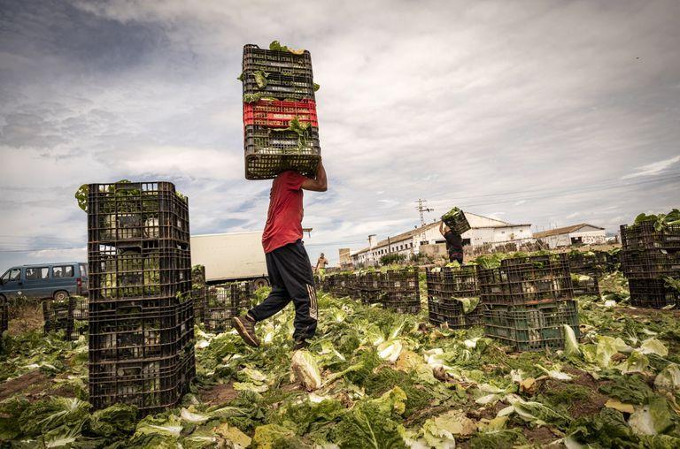 Trabajadores inmigrantes en un campo de Valencia, el pasado lunes.