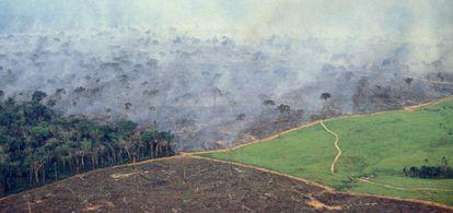 Vista aérea de la selva del Amazonas donde se pueden apreciar los efectos de la deforestación.