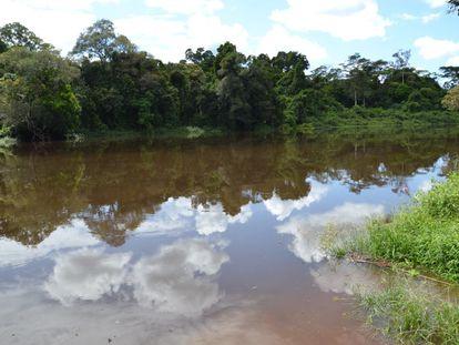 El río Dja en el margen sur de la reserva / Chema Caballero
