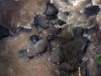 Los cuerpos de varios elefantes accidentados yacen en el fondo de la cascada en Tailandia.