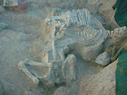 Fosiles del 'Decennatherium rex'.