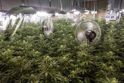 Operación de la Guardia Civil en un inmueble de la localidad de Atarfe, en Granada, donde intervinieron un cultivo ilegal de marihuana en interior.