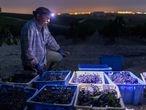 Jesús Odero Caballero es vendimiador desde niño,  realiza la vendimia nocturna en la viña el corregidor, para la bodega Luis perez , en Jerez de la Frontera, Cádiz