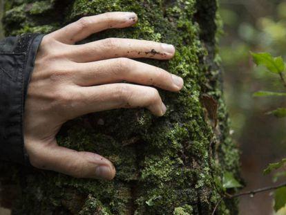 Imagen de un árbol en un bosque de Girona.