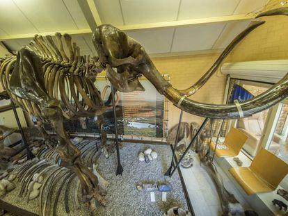 El esqueleto del mamut subastado.