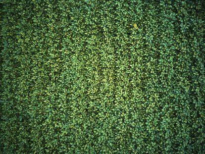 Detalle de una de las plantaciones de soja junto a la Flona donde vive Dani.