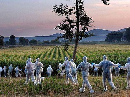 Acción contra cultivos presuntamente transgénicos en Torroella de Montgrí (Girona)