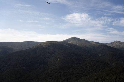Pinar de los Belgas desde la caseta de vigilancia de Cabeza Mediana, en la vertiente madrileña de la sierra de Guadarrama.