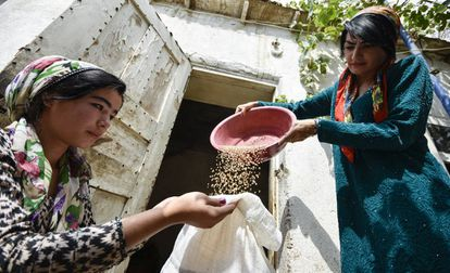 Dos granjeras recogen grano en Gisar, Tajikistán.