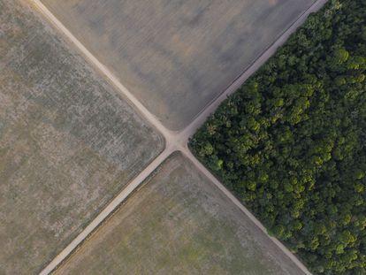 Un fragmento de la selva amazónica junto a campos de soja en Belterra, en el Estado de Pará, Brasil.