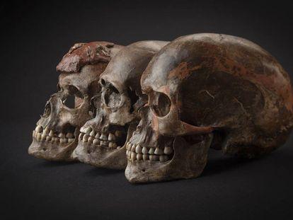 Tres cráneos hallados en la República Checa asociados a la cultura gravetiense