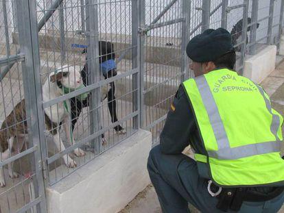 Los perros que mataron a un hombre de Alicante, antes de ser sacrificados.