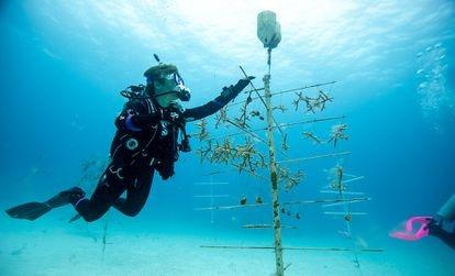 Desde el estallido de la pandemia, en el Coral Lab de República Dominicana se ha seguido investigando por la perpetuidad de las especies.