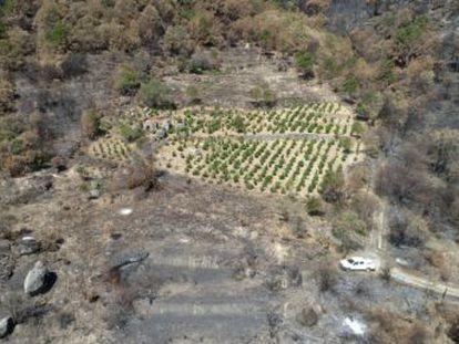 El incendio forestal de Cadalso de los Vidrios y Cenicientos del pasado 28 de junio dañó una de las principales zonas vinícolas de la región, cuyos dueños temen que los caldos pierdan su prestigio emergente