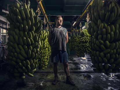 Yulian Lorenzo, el martes en un local de empaquetado de plátanos en Fuencaliente (La Palma).
