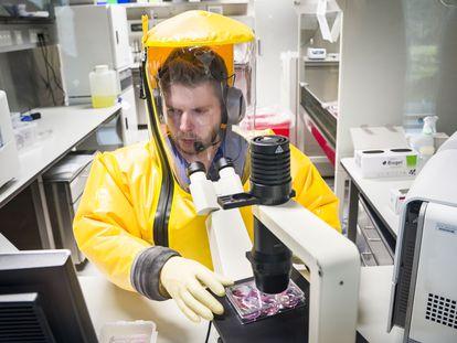 Un investigador trabaja en un instituto de virología alemán que busca una vacuna contra el coronavirus.