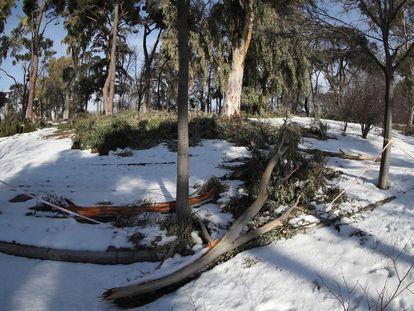 Zonas nevadas y restos de ramas en el madrileño parque de El Retiro este viernes.