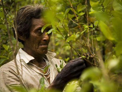 Cerca de 4.000 lenguas de las 6.700 del planeta, son indígenas. Y están estrechamente relacionadas con los sistemas alimentarios.