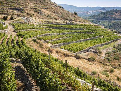 En la página anterior, viñasde la variedad godello, en Valdeorras (Ourense).