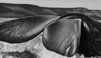 Las fotografías de este reportaje pertenecen al proyecto Genesis del fotógrafo brasileño Sebastião Salgado, que se expondrán hasta finales de enero en Ávila y Albacete en la Obra Social La Caixa.