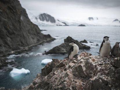 Un grupo de pingüinos, en la Antártida el 11 de febrero pasado.