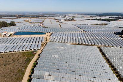 Invernaderos para el cultivo de fresas en la cuenca del Guadalquivir.