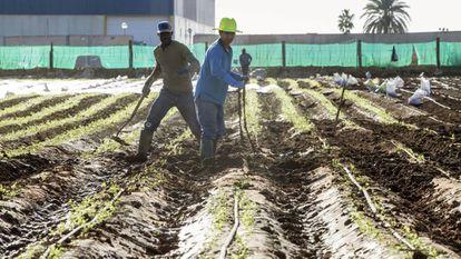 Trabajadores en una finca de San Javier, Murcia, muy afectada por las lluvias