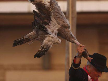Un jinete trata de descabezar a uno de los gansos, este martes.