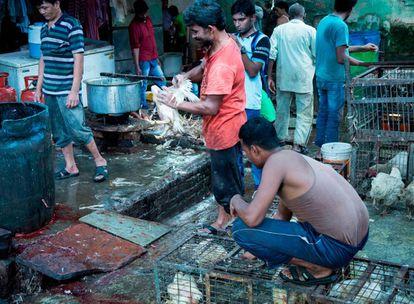Un mercado de animales vivos en India.
