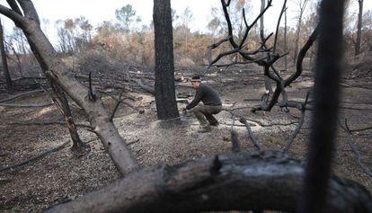 Tala de árboles quemados en los bosques del Empordà.