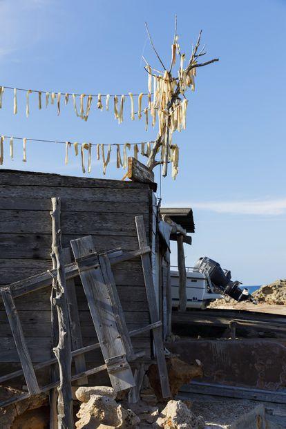 El célebre pescado seco (peix sec) de Formentera se hace con piezas de raya, musola y cazón. La brisa es el ingrediente clave.