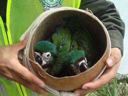 Algunas de las aves confiscadas en el operativo