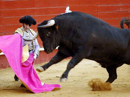 Padilla, ante uno de los toros de la corrida de ayer.